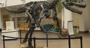 Allosaurus_SDNHM-thumb-350x256-295