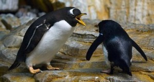 two-angry-penguins-thumb-360x235-353